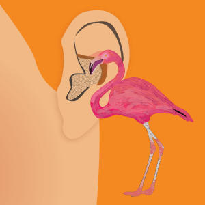Promo image for Finding Our Flamingo: Rijn Collins on taxidermy, audio fiction and winning the inaugural Sarah Awards