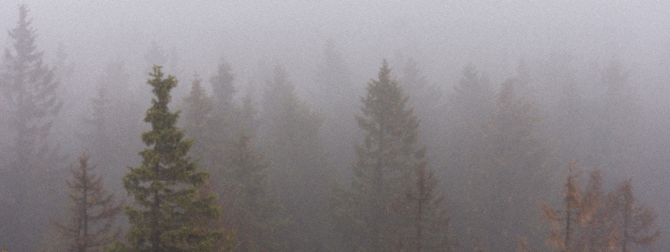 Photograph of trees surrounded by fog