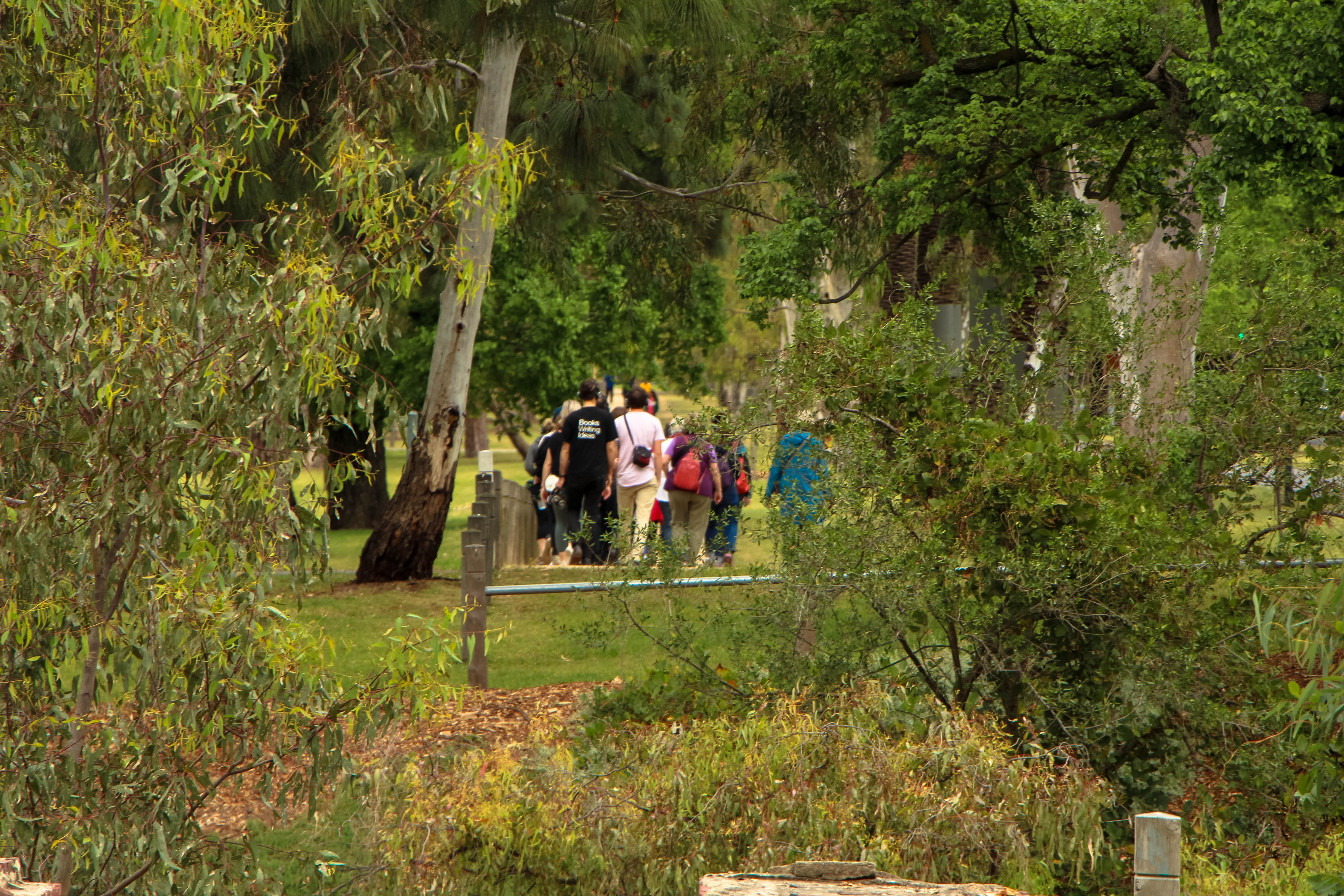 Photo of the group of walkers as seen in the distance through a gap in the trees
