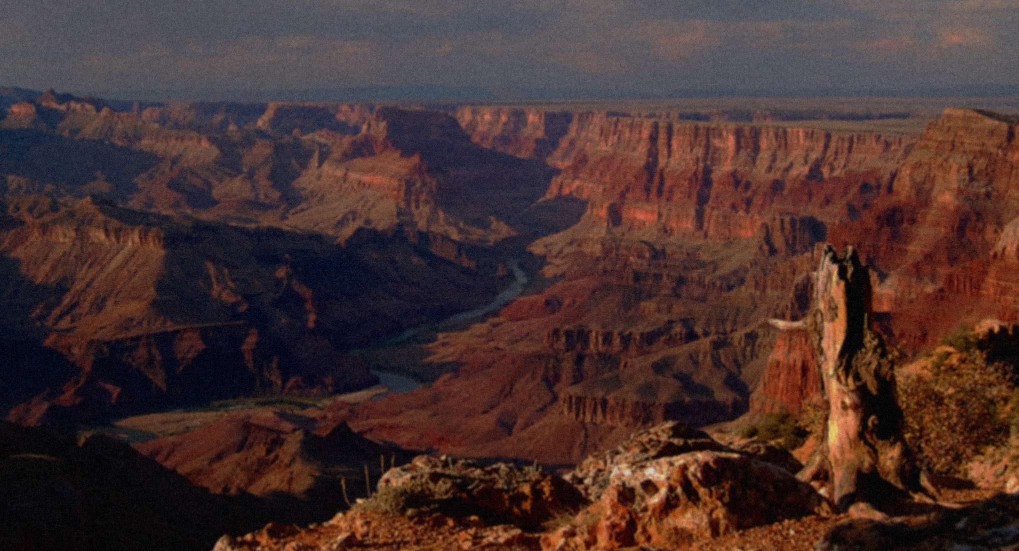 Photograph of the Grand Canyon, with a tree stump in the foreground