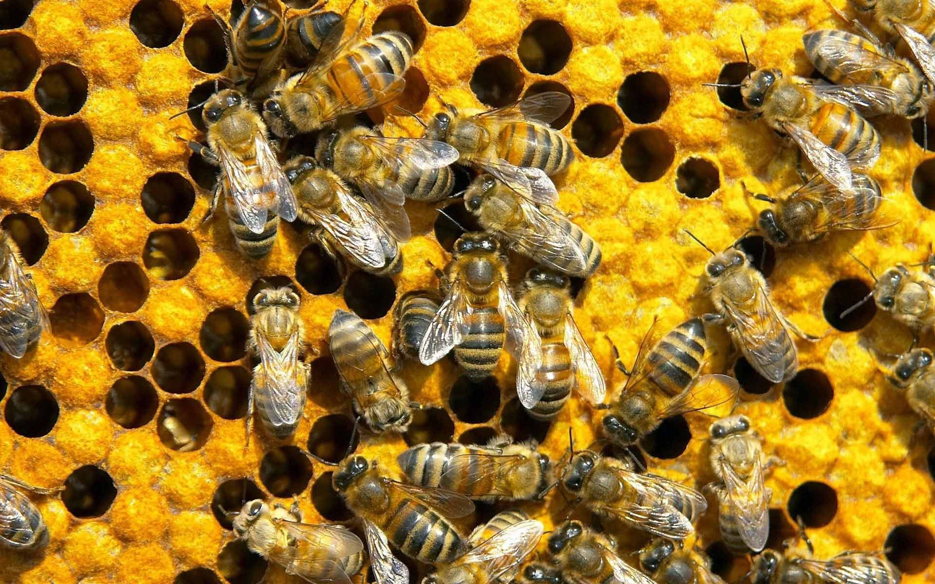 'If bees go extinct, their loss will trigger an extinction domino effect.'