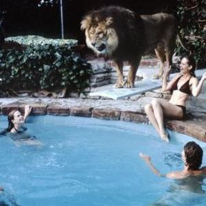Promo image for Friday High Five: Animals: Hitchcock, Lions and Hemingway's Cats