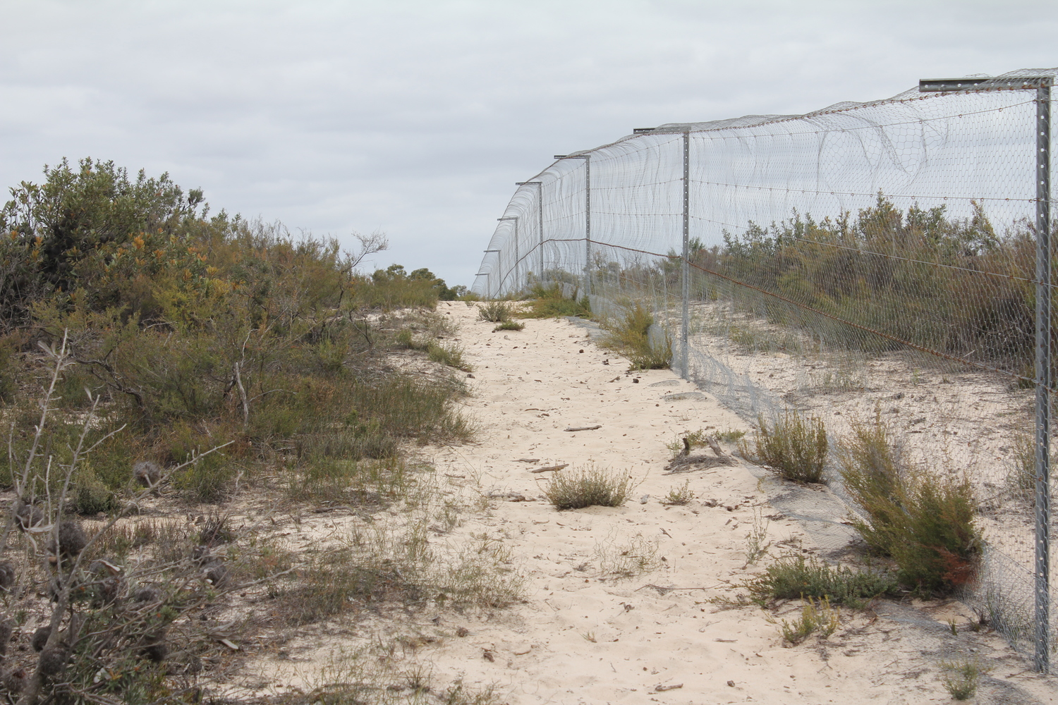 Little Desert's predator-proof fence